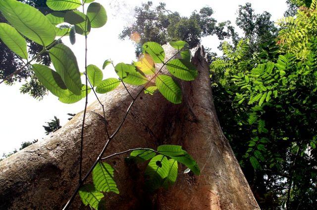 Zdjęcia: płw.malezyjski, Taman Negara 7, MALEZJA
