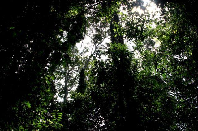 Zdjęcia: płw.malezyjski, Taman Negara 8, MALEZJA