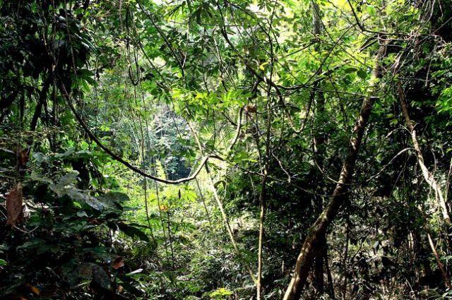 Zdj�cia: p�w.malezyjski, Taman Negara 9, MALEZJA