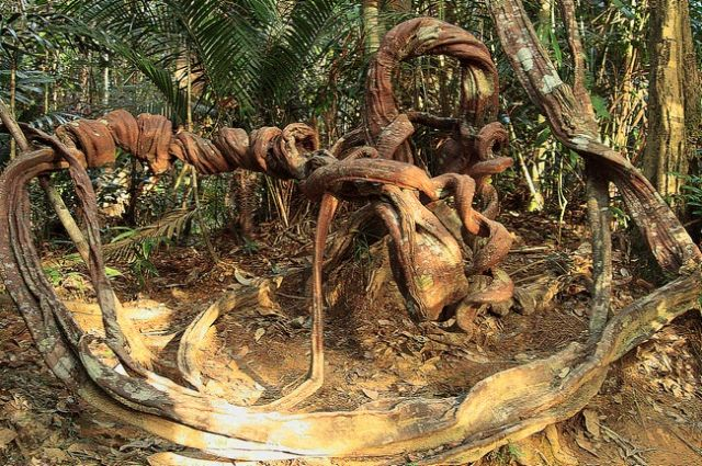 Zdjęcia: Taman Negara, Skręty leśne2, MALEZJA