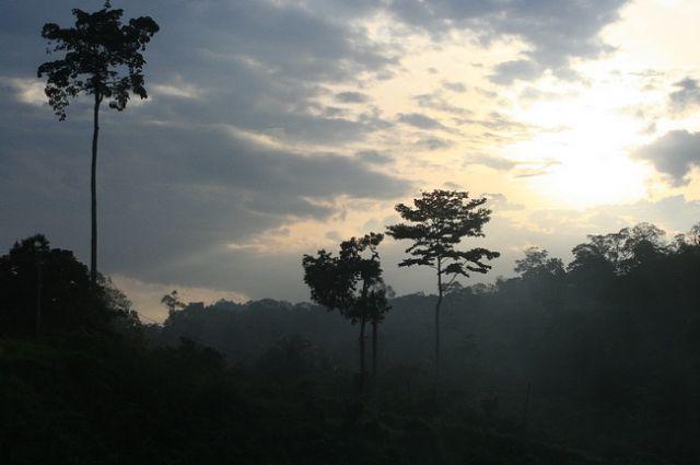 Zdjęcia: płw.malezyjski, Taman Negara, MALEZJA