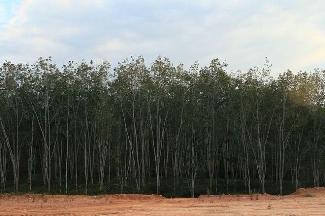 Zdjęcia: płw.malezyjski, Taman Negara 2, MALEZJA