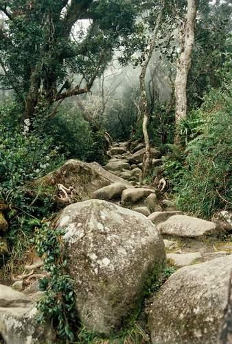 Zdjęcia: Kinabalu Park, Sabah, Borneo, Tajemniczy las, MALEZJA