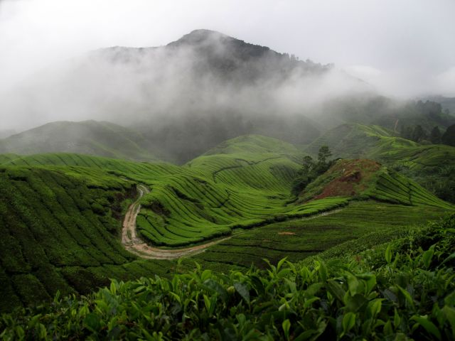 Zdjęcia: Pola herbaciane BOH, Cameron Highlands, Wspomnienia przy herbatce ;-), MALEZJA