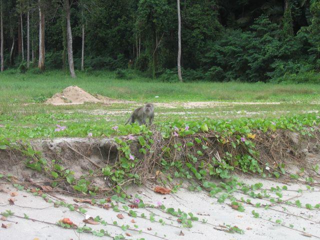 Zdjęcia: dżungla, malezja, MALEZJA