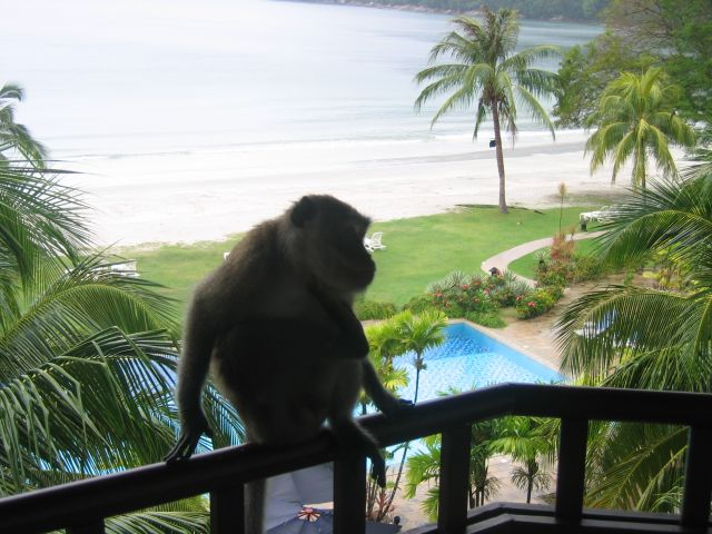 Zdjęcia: malezja, małpa na balkonie, MALEZJA
