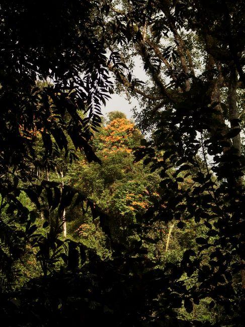 Zdjęcia: Cameron Highlands, Pahang, ... kolorowe ogrody na koronach drzew..., MALEZJA