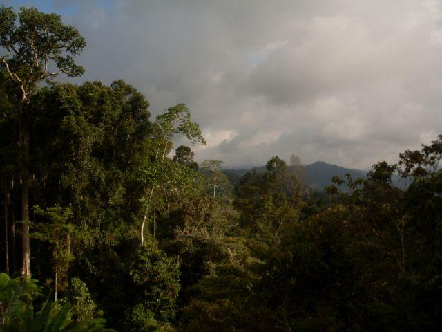 Zdjęcia: Cameron Highlands, Pahang, ... holenderscy pejzażyści?, MALEZJA