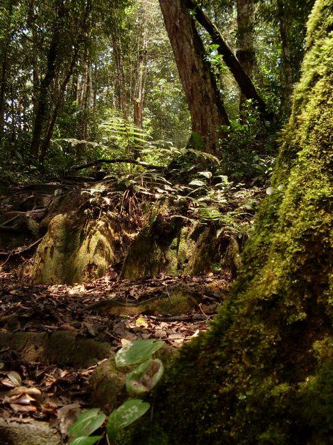 Zdjęcia: Cameron Highlands, Pahang, ... w słońcu..., MALEZJA