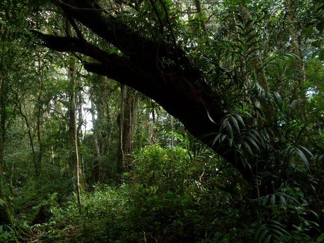 Zdjęcia: Cameron Highlands, Pahang, ... i tylko kóz brak..., MALEZJA