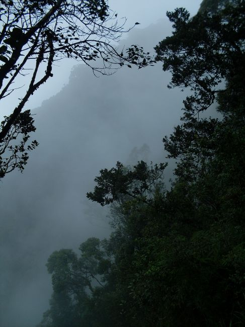 Zdjęcia: Cameron Highlands, Pahang, ... w oparach mgły..., MALEZJA