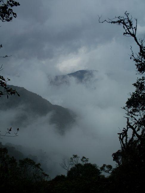 Zdjęcia: Cameron Highlands, Pahang, ... powyżej 2000 m....., MALEZJA