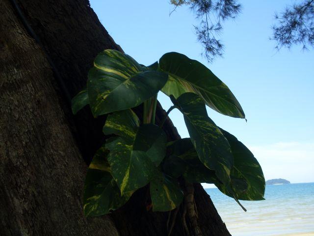 Zdjęcia: Borneo-Kota Kinabalu, Sabah, ... trochę cienia..., MALEZJA