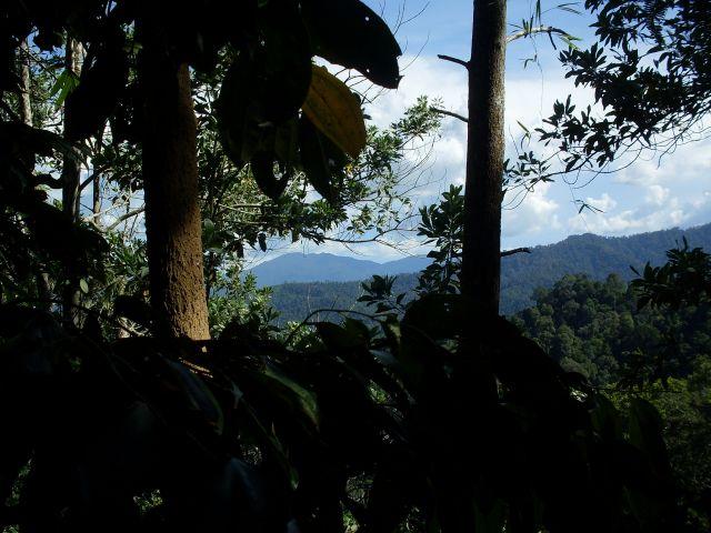 Zdjęcia: Borneo- droga KK-Sandakan, Sabah, ... z niebem w tle..., MALEZJA