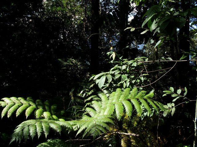 Zdjęcia: Borneo- droga KK-Sandakan, Sabah, ... w cieniu.... i na słońcu..., MALEZJA