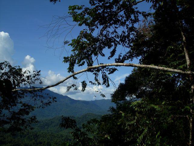 Zdjęcia: Borneo- droga KK-Sandakan, Sabah, ... przeciwfaza...., MALEZJA