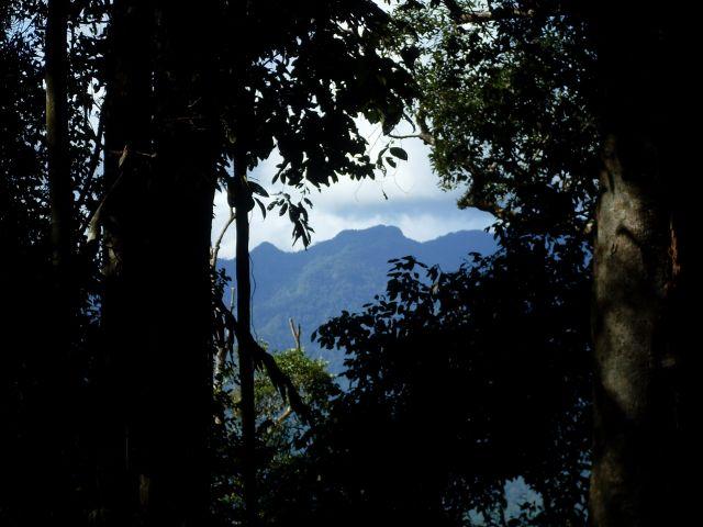 Zdjęcia: Borneo- droga KK-Sandakan, Sabah, ... są wysokie... drzewa..., MALEZJA