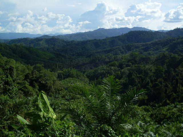 Zdjęcia: Borneo- droga KK-Sandakan, Sabah, ... po horyzont ..., MALEZJA