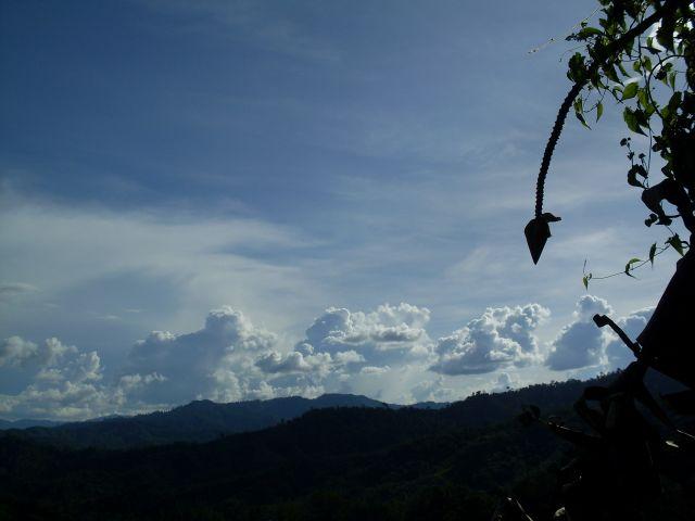 Zdjęcia: Borneo- droga KK-Sandakan, Sabah, ... zwis pionowy górny..., MALEZJA