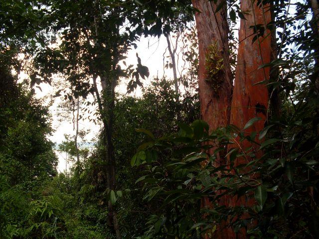 Zdjęcia: Borneo-w drodze na Berhalę, Sabah, ... Berhala od środka..., MALEZJA