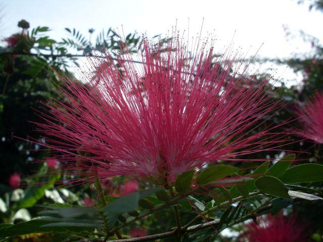 Zdjęcia: Borneo-Sukau-okilice, Sabah, ... promieniście...., MALEZJA