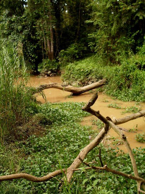 Zdjęcia: Borneo-Sukau-okolice, Sabah, ... kładka na drugi brzeg..., MALEZJA