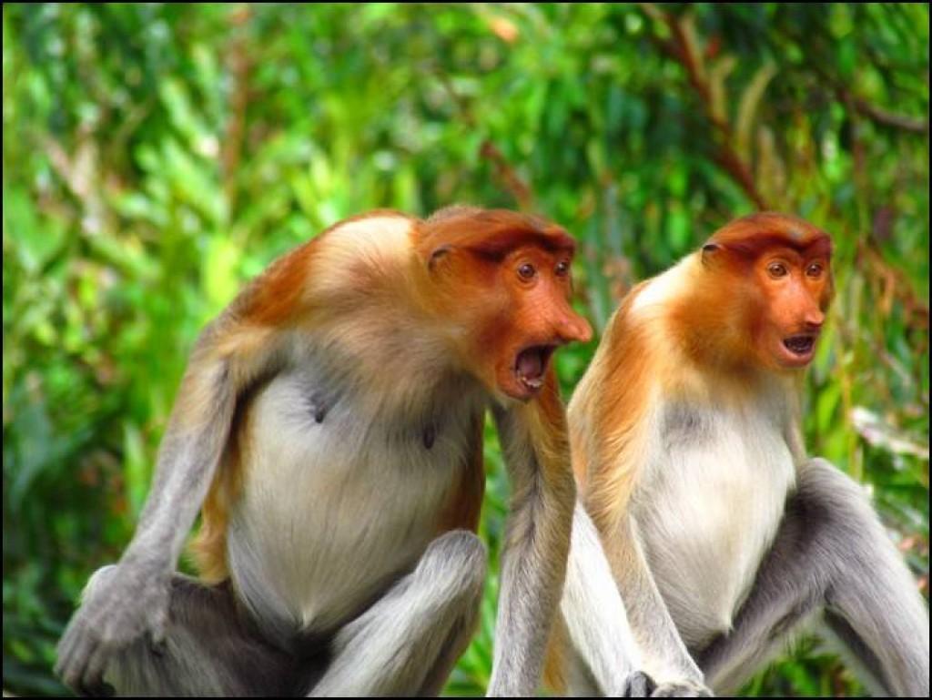 Zdjęcia: Labuk Bay, Borneo, No co TY?!, MALEZJA