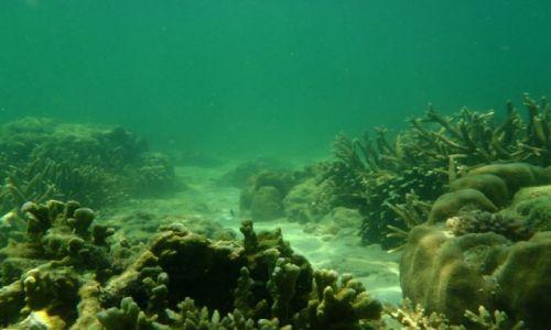 Zdjecie MALEZJA / Borneo, Sabah / Sapi Island / Rafa koralowa