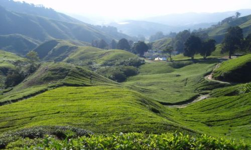Zdjecie MALEZJA / Cameron Highlands / okolice Tanah Rata / czas na herbatk