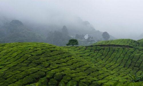 Zdjecie MALEZJA / Cameron Highland / BOH / plantacje herbaty