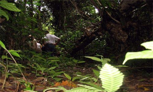MALEZJA / Borneo / Sarawak / Dżungla