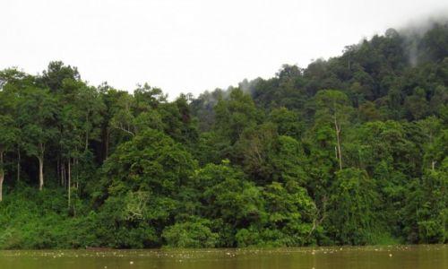 MALEZJA / Taman Negara / Park Narodowy / Las deszczowy