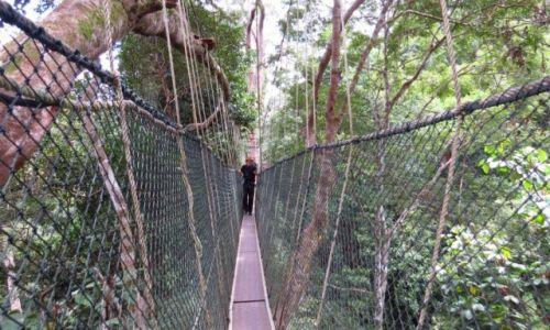 MALEZJA / Taman Negara / Park Narodowy / Wiszace pomosty (Canopy Walk)