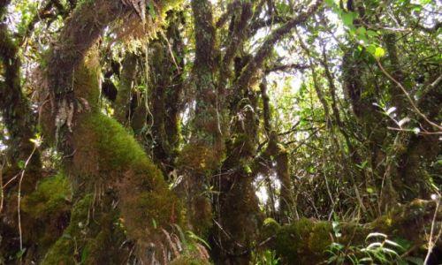 MALEZJA / Cameron Highlands / Tanah Rata / Las deszczowy, 200 mln lat