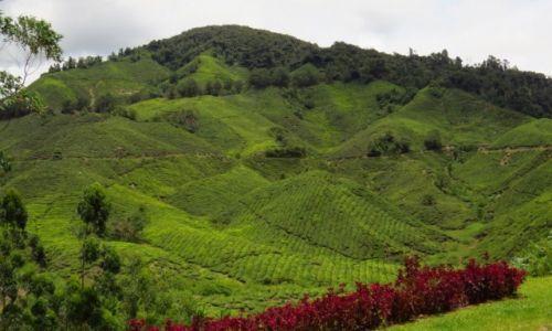 MALEZJA / Cameron Highlands / Tanah Rata / Plantacja herbaty