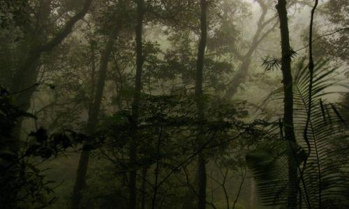 Zdjęcie MALEZJA / Sabah / Kinabalu Park / Konkurs-natura