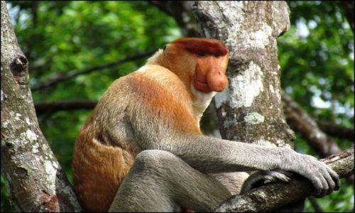 Zdjecie MALEZJA / Borneo / Labuk Bay / On