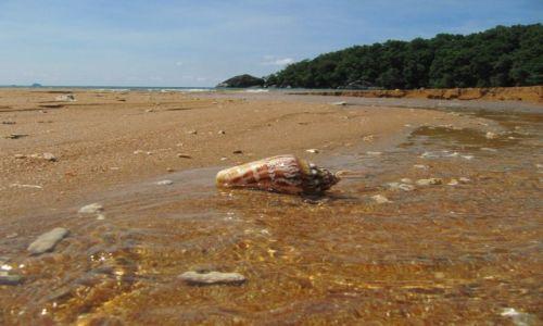 Zdjecie MALEZJA / Wyspa Tioman / Plaża małp / szumiąca muszla w szumiących falach