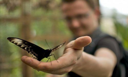 Zdjecie MALEZJA / Cameron Highlands / Tanah Rata / Motylek