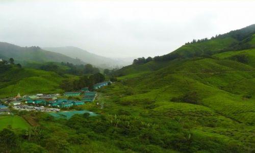 Zdjecie MALEZJA / Cameron Highlands / Herbaciana plantacja / Tu śpi herbata