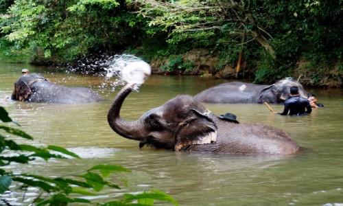 Zdjęcie MALEZJA / Pahang / Kuala Gandah / Elephant Sanctuary