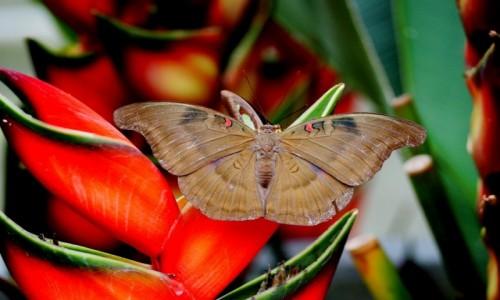 Zdjecie MALEZJA / Cameron Highlands / Brinchang / Na farmie motyli
