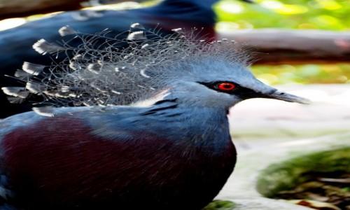 Zdjecie MALEZJA / środkowa część Płw. Malajskiego / Bird Park KL / Czerwonooki