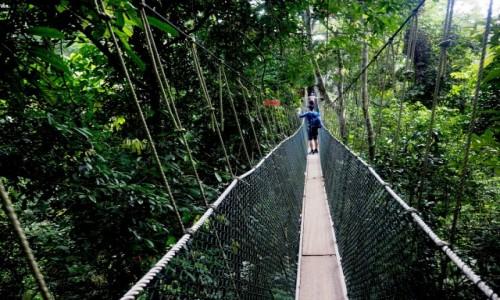 MALEZJA / środkowa część Płw. Malajskiego / Taman Negara  / Canopy walkway
