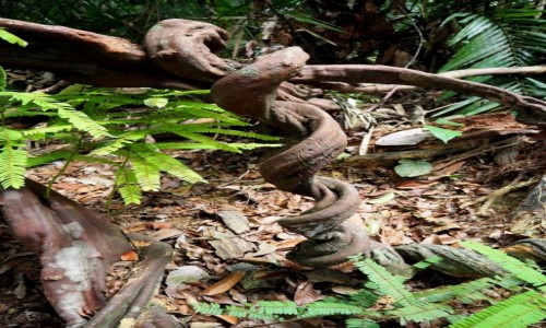 MALEZJA / środkowa część Płw. Malajskiego / Taman Negara / Spacerując po dżungli