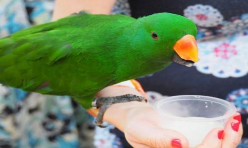 Zdjęcie MALEZJA / KL / Bird Park / Zieloniutka,,,