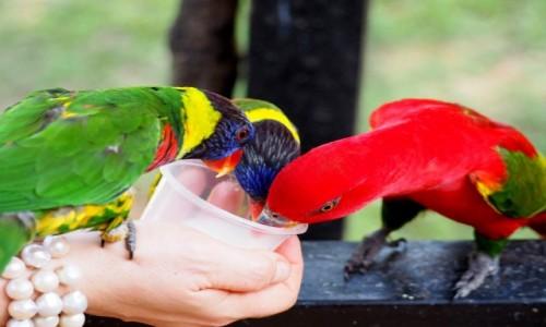 Zdjęcie MALEZJA / KL / Bird Park / Smacznego