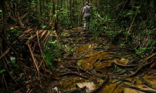 MALEZJA / Borneo / Bako / Galeria testowa - wgrywanie zdjęc do artykułu.