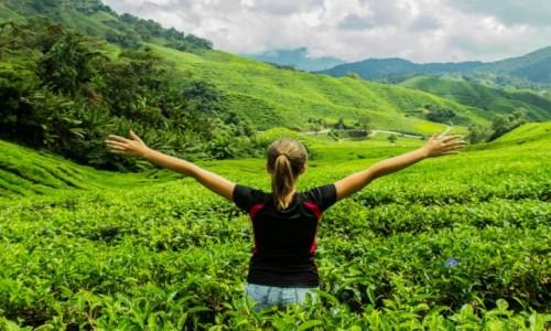 Zdjecie MALEZJA / Cameron Highland / Plantacja herbaty / Dla takiej chwi