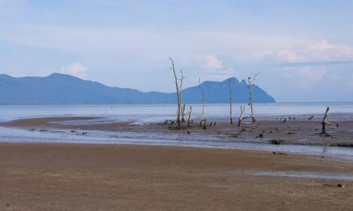 Zdjęcie MALEZJA / Borneo / NP Bako / Odpływ